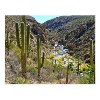 Tanque Verde Canyon Post Cards