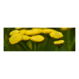 Tansy Double-Sided Mini Business Cards (Pack Of 20)