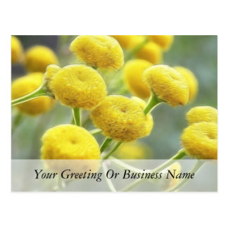 Tansy Flowers Postcard