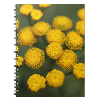 Tansy Tanacetum vulgare Notebook