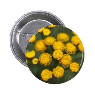 Tansy Tanacetum vulgare Pinback Button