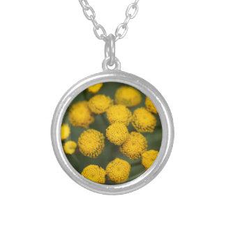 Tansy Tanacetum vulgare Round Pendant Necklace