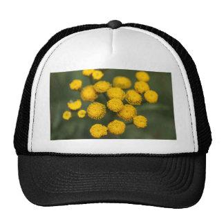 Tansy Tanacetum vulgare Trucker Hat