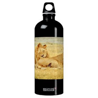 tanzania-280340 WILD BIG CATS LIONS  tanzania sere Aluminum Water Bottle
