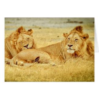 tanzania-280340 WILD BIG CATS LIONS  tanzania sere Card