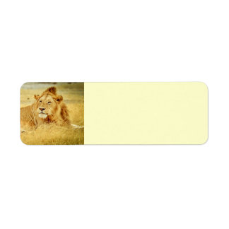 tanzania-280340 WILD BIG CATS LIONS  tanzania sere Label