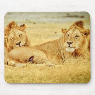 tanzania-280340 WILD BIG CATS LIONS  tanzania sere Mouse Pad