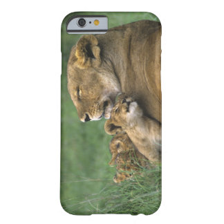 Tanzania, Ngorongoro Crater. African lion mother Barely There iPhone 6 Case