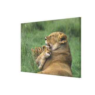 Tanzania, Ngorongoro Crater. African lion mother Gallery Wrap Canvas