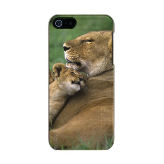 Tanzania, Ngorongoro Crater. African lion mother Metallic iPhone SE/5/5s Case