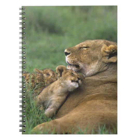 Tanzania, Ngorongoro Crater. African lion mother Notebook