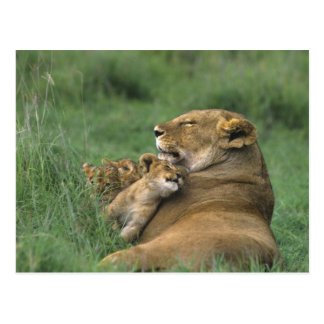 Tanzania, Ngorongoro Crater. African lion mother Postcard