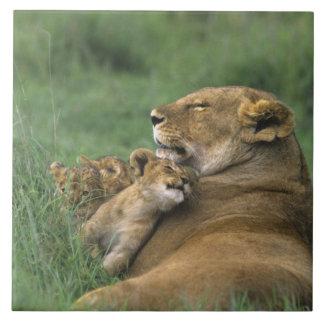 Tanzania, Ngorongoro Crater. African lion mother Large Square Tile
