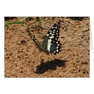 Tanzanian Butterfly Greeting Card