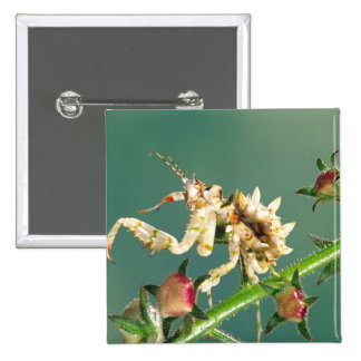 Tanzanian Flower Mantis, Pseudocreboter 2 Inch Square Button