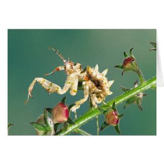 Tanzanian Flower Mantis, Pseudocreboter Cards