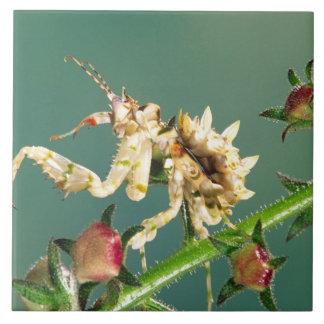 Tanzanian Flower Mantis, Pseudocreboter Ceramic Tile