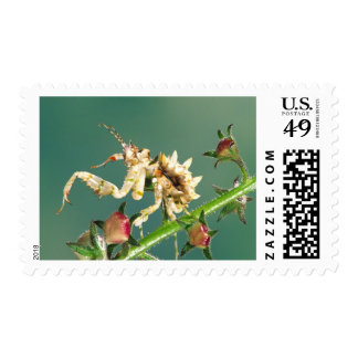 Tanzanian Flower Mantis Pseudocreboter Stamp