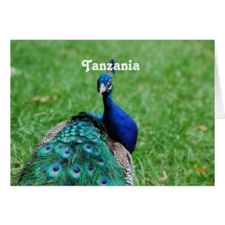 Tanzanian Peacock Greeting Card