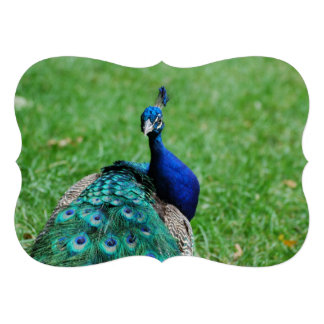 Tanzanian Peacock Personalized Announcement