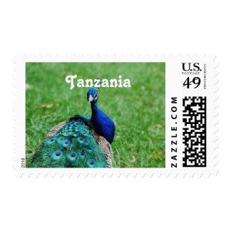 Tanzanian Peacock Postage Stamp