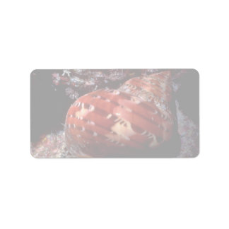 Tapestry turban (Turbo petholatus) Shell Personalized Address Labels