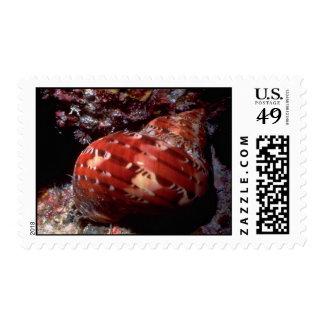 Tapestry turban (Turbo petholatus) Shell Postage