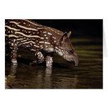 Tapir brasileño, becerro joven al lado del río tarjeta