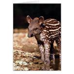 Tapir brasileño, becerro joven al lado del río felicitacion