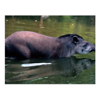 Tapir brasileño (terrestris del Tapirus) Tarjeta Postal
