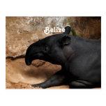 Tapir de Belice Baird Postales
