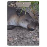 tapir el dormir bajo cierre del palmetto para arri