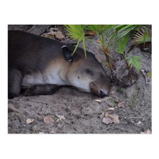 tapir el dormir bajo cierre del palmetto para postales