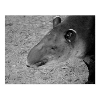 tapir head black and white zoo animal postcard