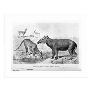 Tapir-like animals art postcard