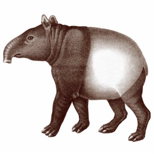 Tapir malayo/imán asiático del Tapir para su refri Imán Fotoescultura