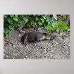 tapir que duerme en la arena