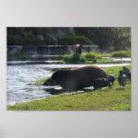 Tapir que toma una inmersión en el río posters