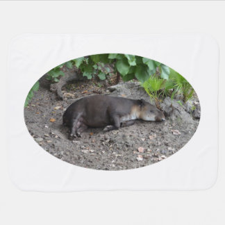 tapir sleeping on sand swaddle blanket