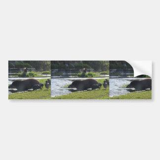 Tapir Taking A Dip In The River Bumper Stickers