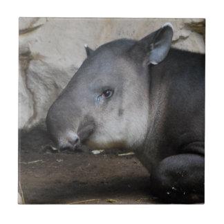 Tapir Tile