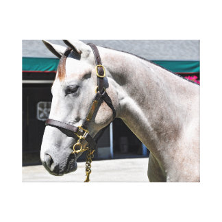 Tapit-Rote Fasig Tipton Yearling Sales Canvas Print
