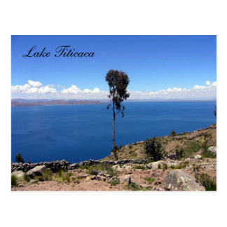 taquile tree postcard