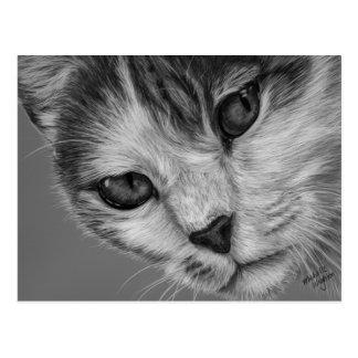 Tara - arte blanco y negro del gato postal