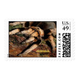 Tarantula 2 stamp