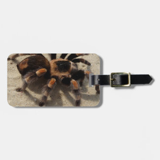 Tarantula brachypelma red knee poisonous bag tag