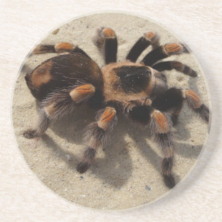 Tarantula brachypelma red knee poisonous drink coasters