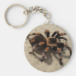 Tarantula brachypelma red knee poisonous keychain