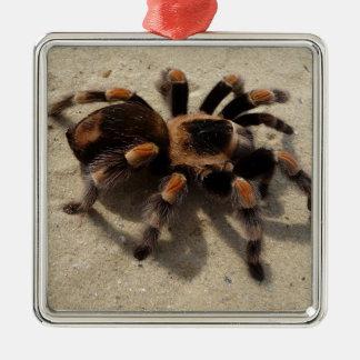 Tarantula brachypelma red knee poisonous christmas ornament