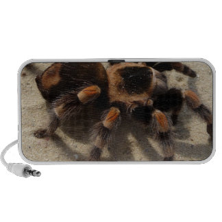 Tarantula brachypelma red knee poisonous mini speakers